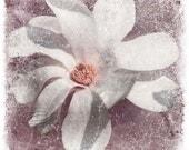 "White magnolia flower photo home decor spring fine art, 10x10"" print"