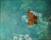 "Butterfly photo nursery decor art photo mint green orange white 8x10"" print"