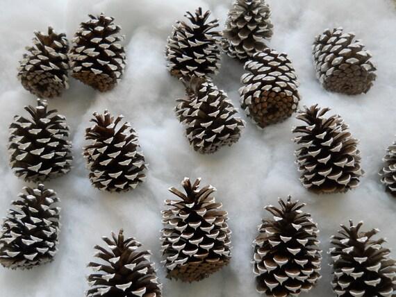 15 Handpainted Pinecones White Tips Christmas Ornament Bowl Filler Decor