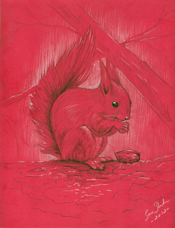 The Red Squirrel