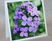 Easter Mother's Day -Spring Buds cards variety pack -flower photography- 5 1/2 inch square-peach, lilac & wild phlox