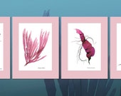 Assorted Pink Seaweed Prints