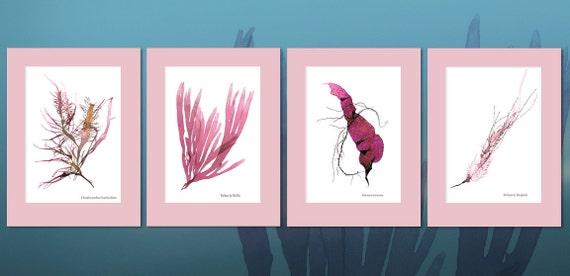 Assorted Pink Seaweed Prints