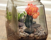 Another World Venus Fly Trap and Succulent Terrarium