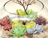 Another World Spring Fishbowl Terrarium w/ Sea Whip Tree