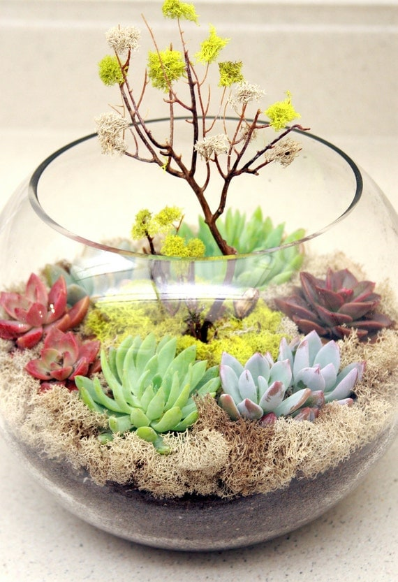 Another World Spring Fishbowl Terrarium w/ Sea Whip Tree