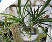 Plant Globe or Root Propagator