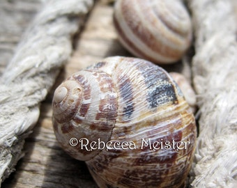 Snail Shells of Chania Crete Greece 5x7 Photograph