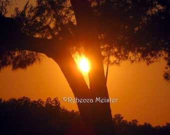Orange Sunset & Tree on Crete / Greece , 8x10 Photograph