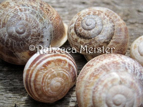 Snail Shells of Chania Crete Greece 5x7 Photograph