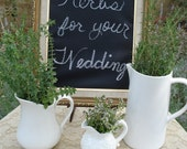 Wedding Decor: Organic Herbs 100 Rosemary Sprigs