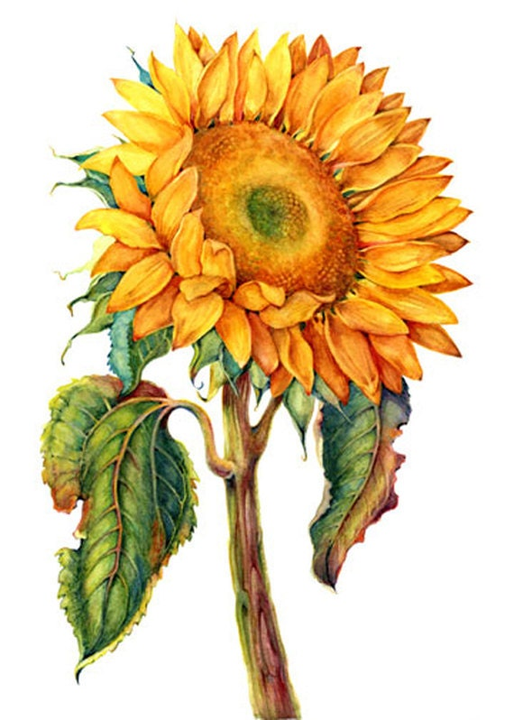 Items similar to Sunflower, 10 for 10.00 on Etsy