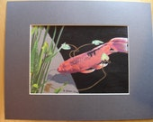 Koi Fish in Pond, Watercolor Mixed Media Painting,  Watercolour, Ink, Pencil Crayons, Mounted Original