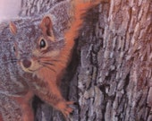 Squirrel on a tree, mixed media painting, watercolor, inks, pencil crayons