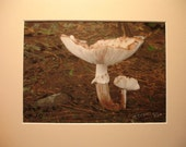 Mushrooms in the Forest, Original Painting, Watercolor, Ink, Pencil Crayon, Mixed Media, Mounted