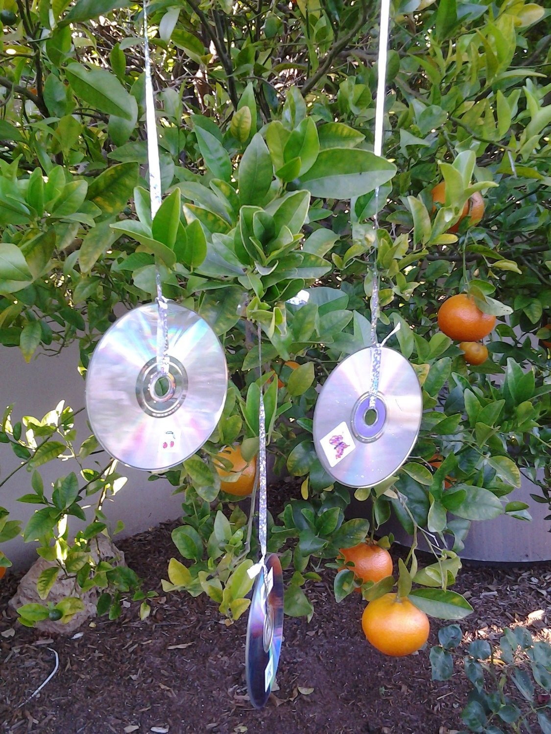 How Can You Make Your Garden More Decorative? - Lessons - Tes Teach