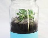 Hand-Painted Turquoise Glazed Succulent Terrarium Kit - Jaranium