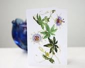 Blank Note Cards, 5 Pack, Passiflora Caerulea