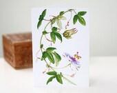 Blank Note Cards, 5 Pack, Passiflora Violacea