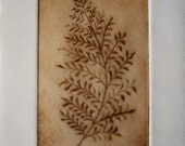 Drypoint Leaf Etching Blank Greeting Card Sepia Ink on Ivory Paper