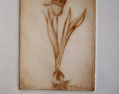 Drypoint Tulip Etching Blank Greeting Card Sepia Ink on Ivory Paper
