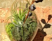 Hanging Teardrop Air Plant Terrarium - A Perfect Birthday Gift - DON'T FORGET to add a CHARM