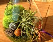Teardrop Air Plant and Moss Terrarium - A wonderful birthday gift idea - DON'T FORGET to add a CHARM
