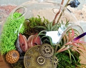 Steampunk Air Plant and Moss Terrarium - A Perfect Birthday or Fathers Day Gift