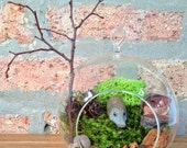 Totally Care and Maintenance Free Hedgehog Terrarium (or any other figurine from my living terrariums in my shop)