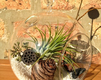 Glass Globe Air Plant Terrarium - a wonderful birthday idea - DON'T FORGET to add a CHARM