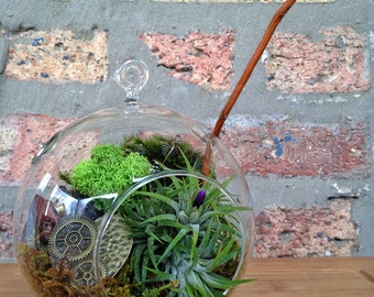Steampunk Air Plant Terrarium - A Perfect Birthday or Valentines Day Gift