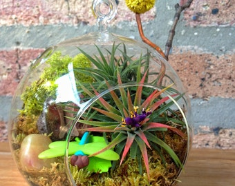 Childrens Dragonfly and Air Plant Terrarium - A Perfect Birthday Gift
