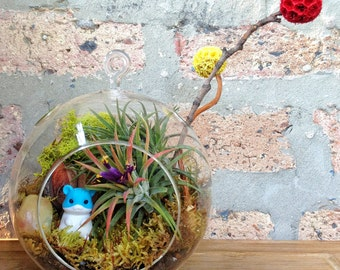Childrens Hamster and Air Plant Terrarium