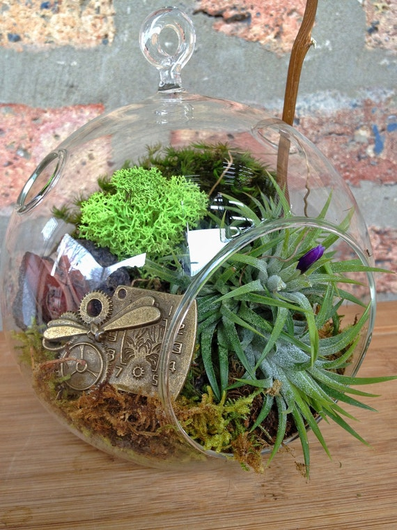 Steampunk Air Plant Terrarium A Perfect Birthday Or