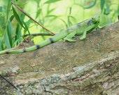 Sweet Pea the Lizard GEOCACHE Nanocache  Realistic Animal Geocaching CAMO