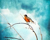 Nature Spring -Red Robin Bird Sky Blue Clouds Tree Branches -Cyan White Blue Orange -Home Decor Wall Art Fine Art Print - DebiBishop