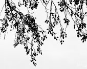 Branches Hanging Silhouette - Black and White Photograph -Contemporary Minimalist Home Decor Abstract Fine Art Print -8X10 -8X12 -16X24