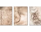 Dried Grass Nature Winter  - Set of 3 Photographs 5x7 Each - Home Decor  Fine Art Print