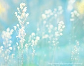 Dried Grass Weeds -Blue Turquoise White  -Nature Abstract Spring Summer Photograph -Home Decor  -Wall Art -Fine Art Print
