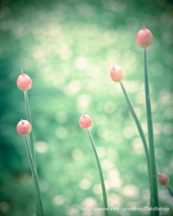 Spring Buds Bokeh Flowers Allium - Photograph 8x10 -Green Orange Pink  -Home Decor  Fine Art Print