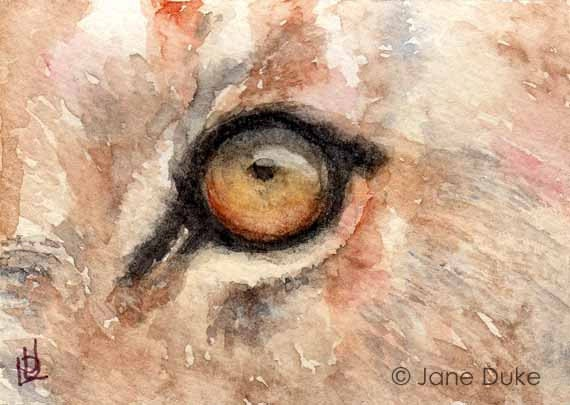 Lion Eye ACEO Watercolour Original Painting