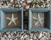 Shadow Box with Armored Starfish - Set of 2, Unique Gift