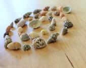 35 Miniature Sea Shells