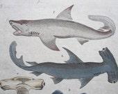 Antique Hand Colored Engraving circa 1763- Amazing Sharks-Hammerhead, Sword Fish & Saw Fish