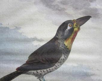 Antique Hand Colored  Bird Engraving by Comte de Buffon-1766