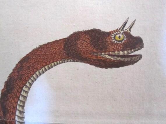 Antique Hand Colored Print Seba Snake,Printed in 1801, J. Pass Horned Viper