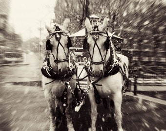 White Horse Photography, White Horses, Winter, Nature, Snow, Magical, Dreamy, Ivory, Black and White, Christmas sale, holiday sale
