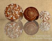 Cone Shells, Fine Art Photography, Seashell Photography