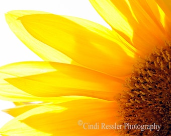 Sunflower 2, Photography, Floral Photography,  Botanical Photography, Photography, Flower Photography, Fine Art Photography