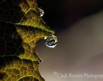 Grape Leaf with Raindrop, Fine Art Photography, Nature Photography, Botanical Photography